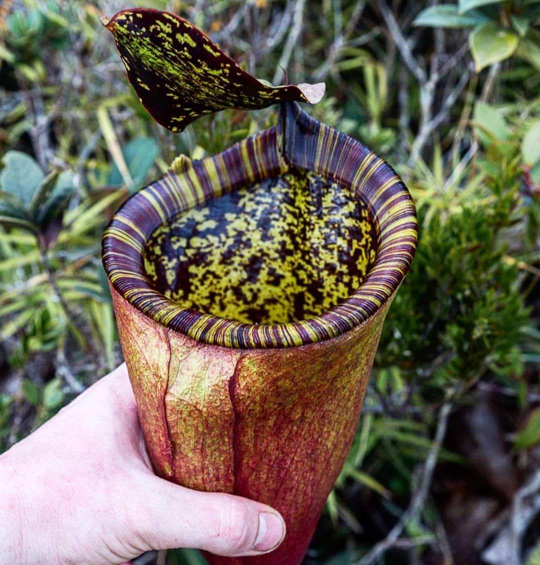 "Plantes carnivores 3/7: la revanche des ""plantes vertes"""