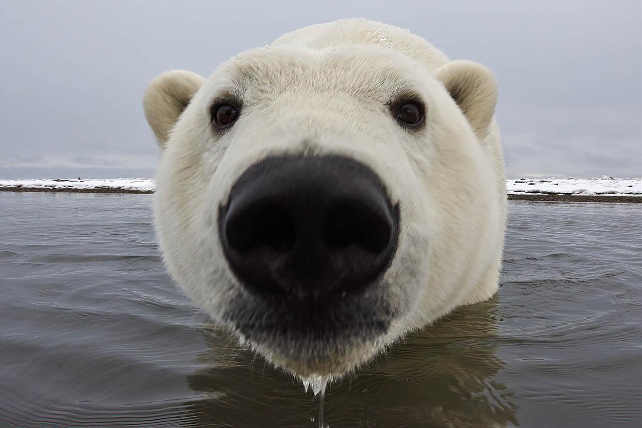Arctique et Antarctique 2/3: les deux faux-jumeaux
