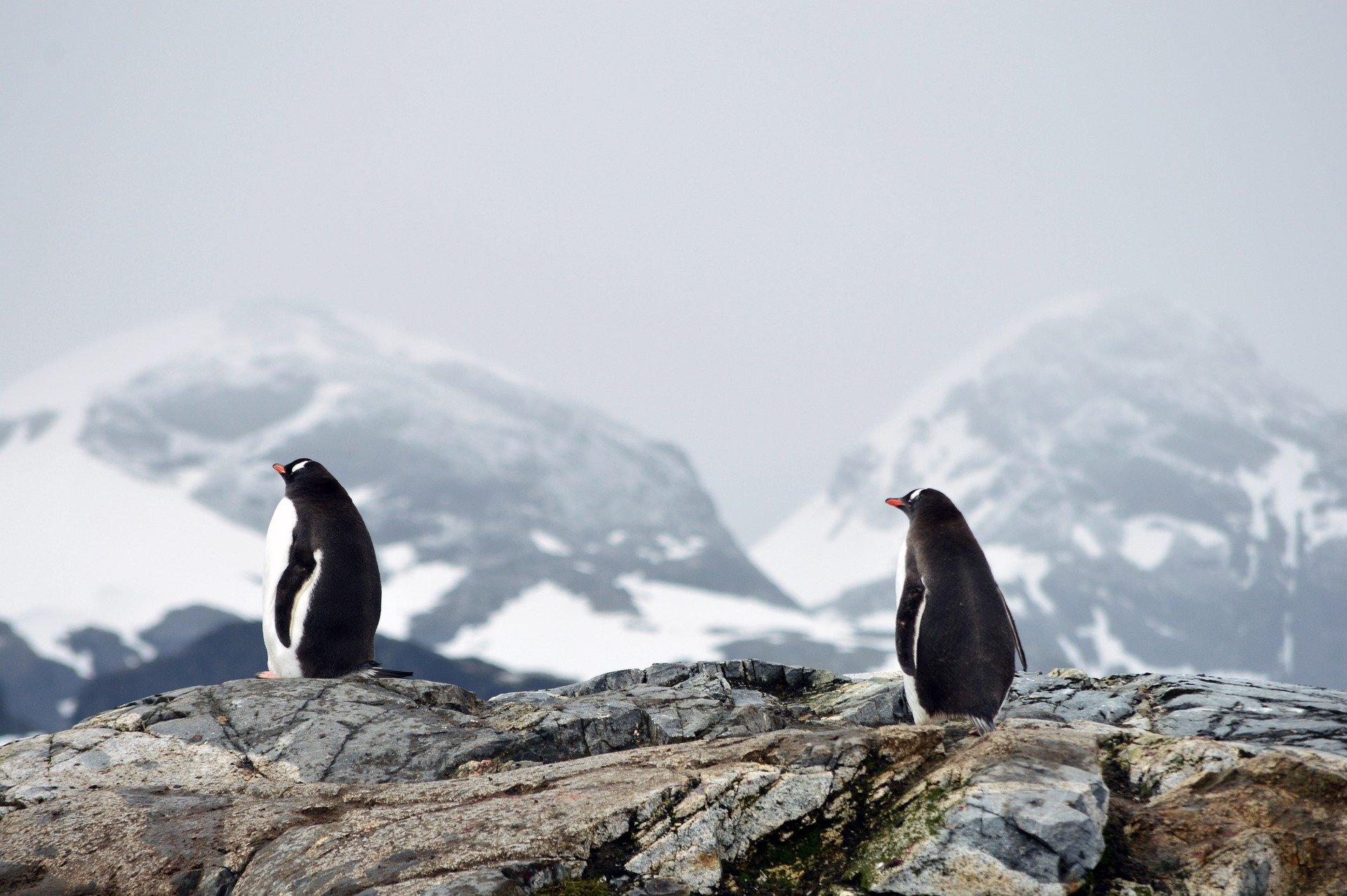Arctique et Antarctique 3/3: les deux faux-jumeaux