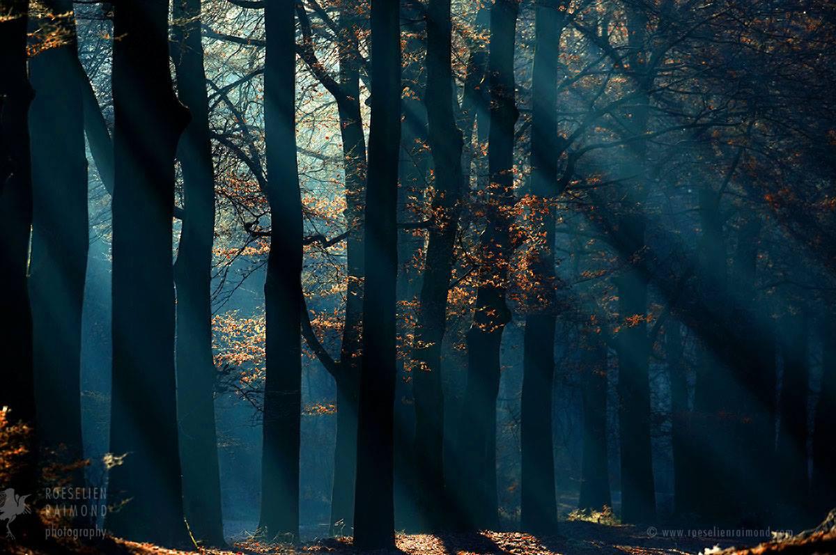 Les plus grands arbres du monde: les racines du ciel…