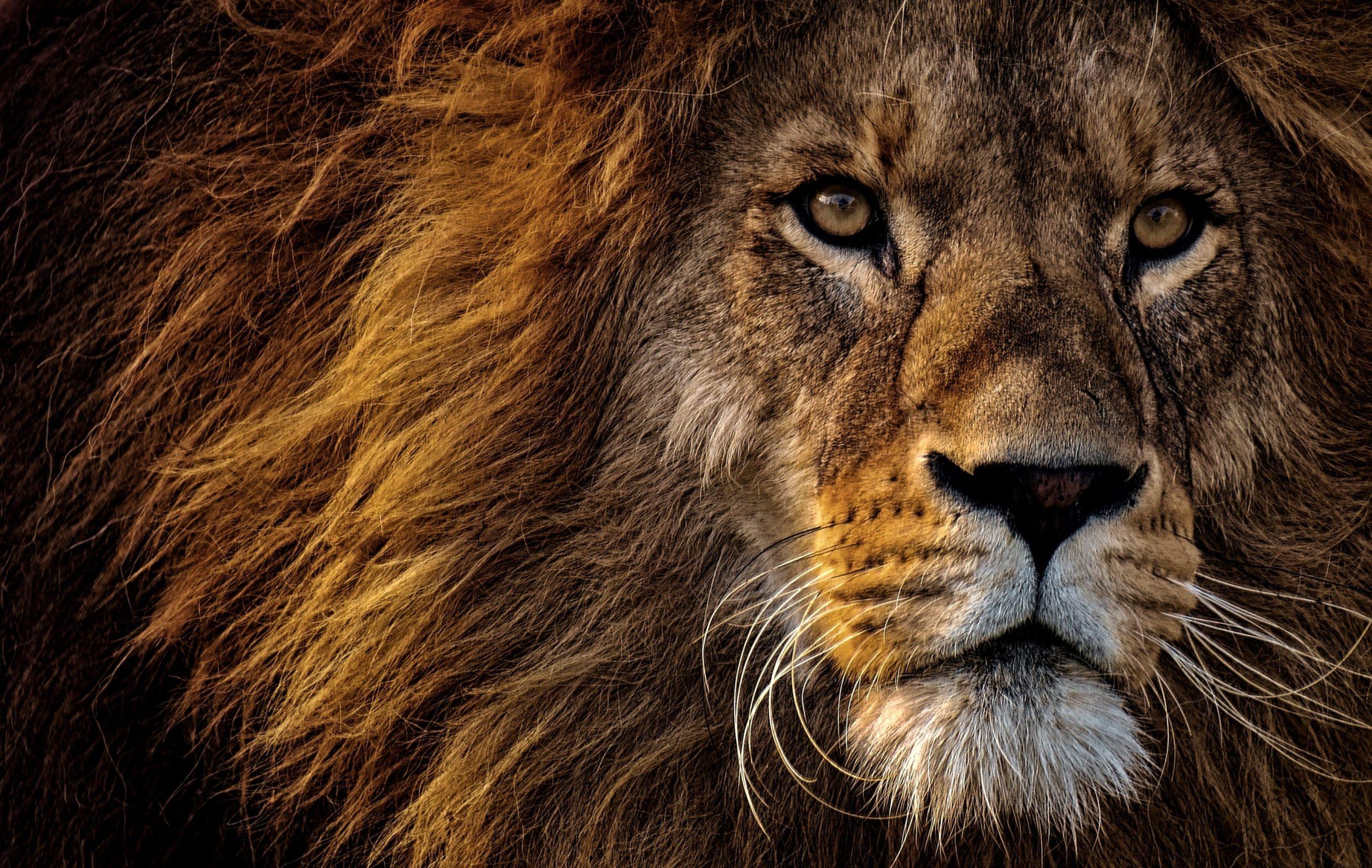 10 infos étonnantes… de plus sur le lion