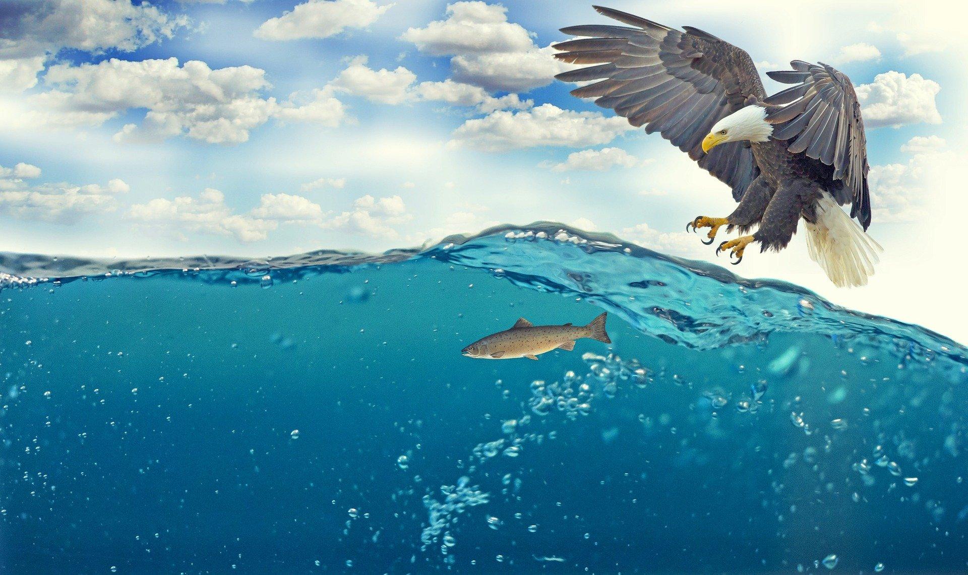La vessie natatoire: le «stab» et le …couteau suisse des poissons